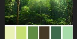 tree-pallette